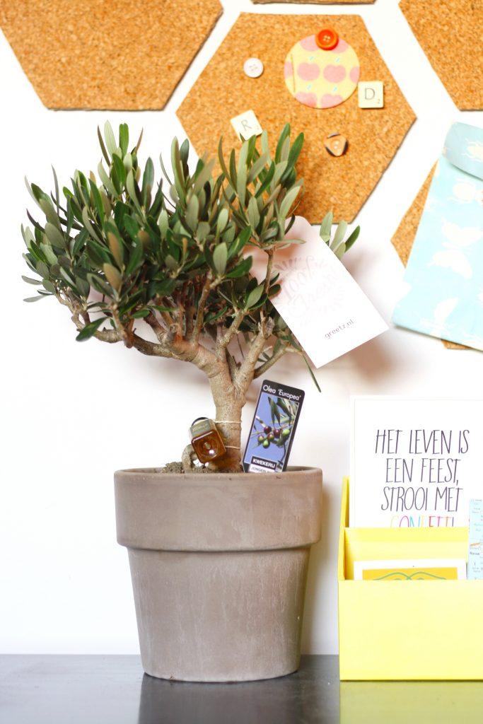 Verras eens met een plant